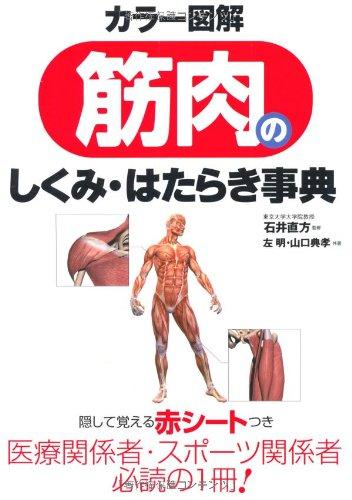 筋肉の仕組み