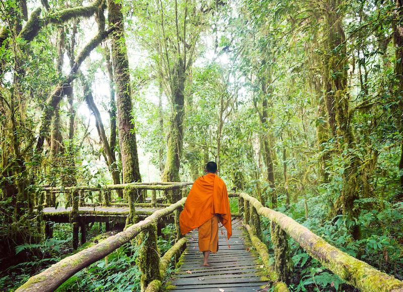 オレンジ色の服を来た僧が林の中を歩いている後ろ姿